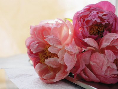 peonies on desk