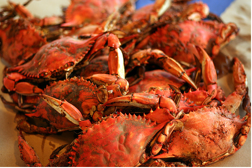 Crab Feasts And Clam Bakes Thefashionmagpie S Blog